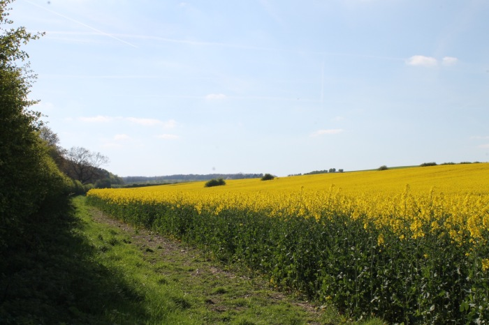 Fields_of_Gold012