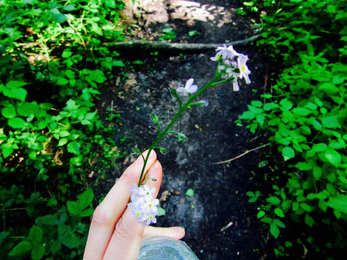 Forget me-nots Orchha Jewels